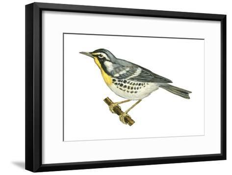 Yellow-Throated Warbler (Dendroica Dominica), Birds-Encyclopaedia Britannica-Framed Art Print