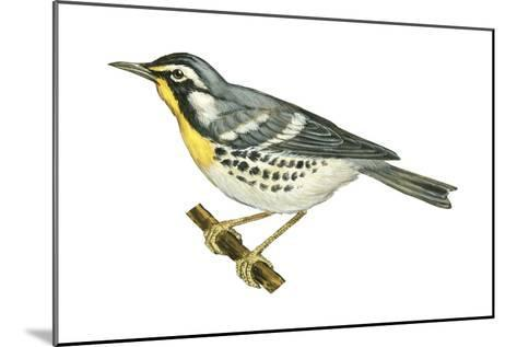 Yellow-Throated Warbler (Dendroica Dominica), Birds-Encyclopaedia Britannica-Mounted Art Print