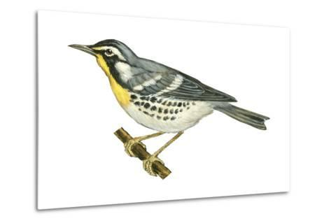Yellow-Throated Warbler (Dendroica Dominica), Birds-Encyclopaedia Britannica-Metal Print