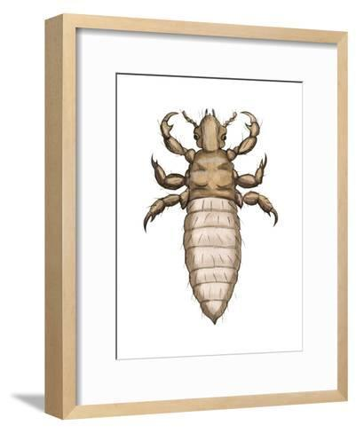 Head Louse (Pediculus Humanus Capitis), Insects-Encyclopaedia Britannica-Framed Art Print