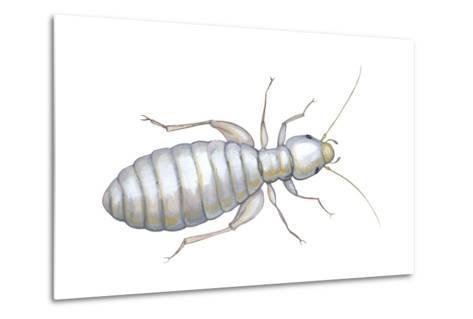 Book Louse (Liposcelis Divinatorius), Insects-Encyclopaedia Britannica-Metal Print