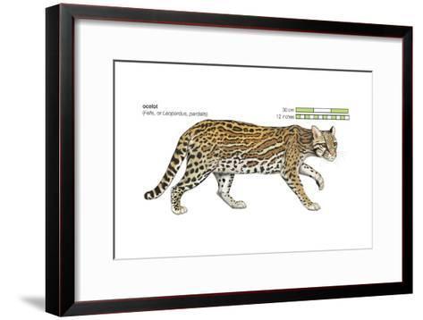 Ocelot (Felis or Lepardus, Pardalis), Cat, Mammals-Encyclopaedia Britannica-Framed Art Print