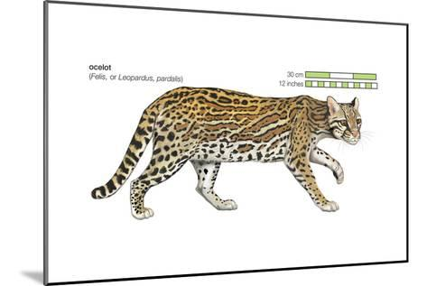 Ocelot (Felis or Lepardus, Pardalis), Cat, Mammals-Encyclopaedia Britannica-Mounted Art Print