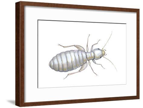 Book Louse (Liposcelis Divinatorius), Insects-Encyclopaedia Britannica-Framed Art Print
