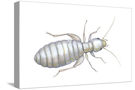 Book Louse (Liposcelis Divinatorius), Insects-Encyclopaedia Britannica-Stretched Canvas Print