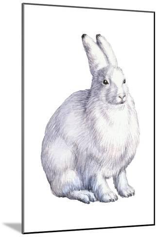 Arctic Hare (Lepus Arcticus), Mammals-Encyclopaedia Britannica-Mounted Art Print