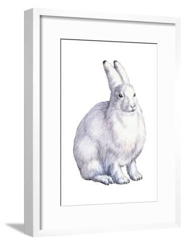 Arctic Hare (Lepus Arcticus), Mammals-Encyclopaedia Britannica-Framed Art Print