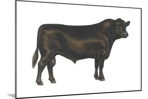 Angus Bull, Beef Cattle, Mammals-Encyclopaedia Britannica-Mounted Art Print