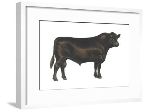 Angus Bull, Beef Cattle, Mammals-Encyclopaedia Britannica-Framed Art Print