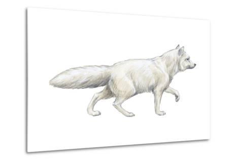 Arctic (Blue), Mammals Fox (Alopex Lagopus), Mammals-Encyclopaedia Britannica-Metal Print