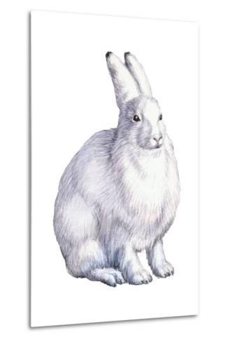 Arctic Hare (Lepus Arcticus), Mammals-Encyclopaedia Britannica-Metal Print