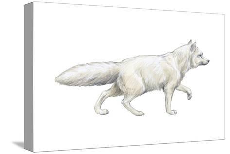 Arctic (Blue), Mammals Fox (Alopex Lagopus), Mammals-Encyclopaedia Britannica-Stretched Canvas Print
