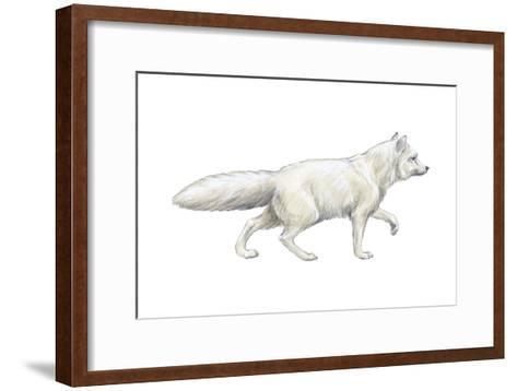 Arctic (Blue), Mammals Fox (Alopex Lagopus), Mammals-Encyclopaedia Britannica-Framed Art Print