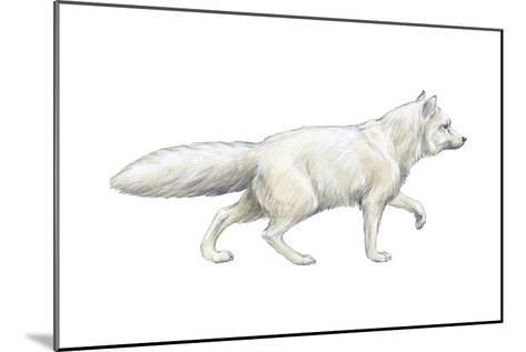 Arctic (Blue), Mammals Fox (Alopex Lagopus), Mammals-Encyclopaedia Britannica-Mounted Art Print