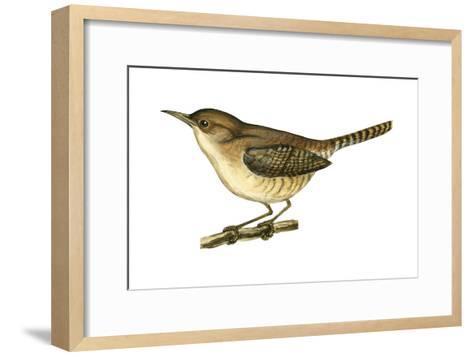 House Wren (Troglodytes Aedon), Birds-Encyclopaedia Britannica-Framed Art Print
