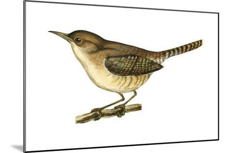 House Wren (Troglodytes Aedon), Birds-Encyclopaedia Britannica-Mounted Art Print