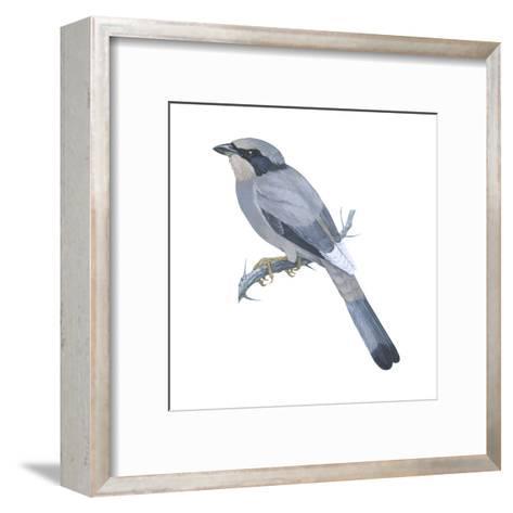Hypocoly (Hypocolius Ampelinus), Birds-Encyclopaedia Britannica-Framed Art Print