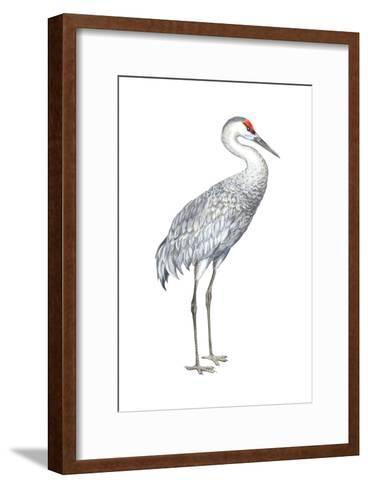 Sandhill Crane (Grus Canadensis), Birds-Encyclopaedia Britannica-Framed Art Print