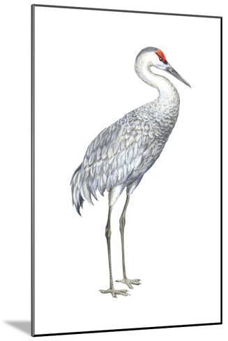 Sandhill Crane (Grus Canadensis), Birds-Encyclopaedia Britannica-Mounted Art Print