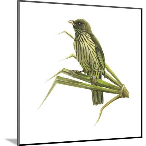 Palm-Chat (Dulus Dominicus), Birds-Encyclopaedia Britannica-Mounted Art Print