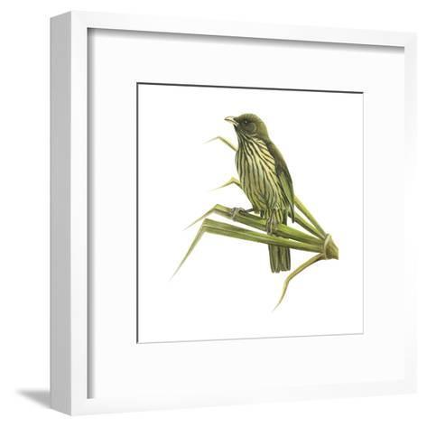 Palm-Chat (Dulus Dominicus), Birds-Encyclopaedia Britannica-Framed Art Print