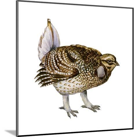 Sharp-Tailed Grouse (Tympanuchus Phasianellus), Birds-Encyclopaedia Britannica-Mounted Art Print