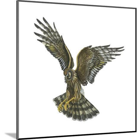 Marsh Hawk (Circus Cyaneus), Birds-Encyclopaedia Britannica-Mounted Art Print