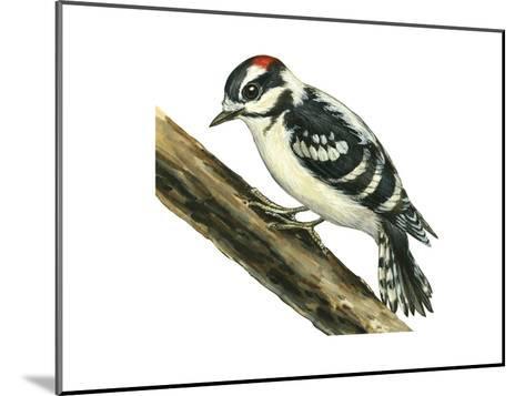 Downy Woodpecker (Dendrocopus Pubescens), Birds-Encyclopaedia Britannica-Mounted Art Print
