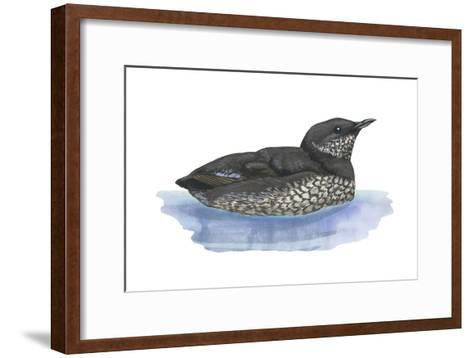 Marbled Murrelet (Brachyramphus Marmoratus), Birds-Encyclopaedia Britannica-Framed Art Print