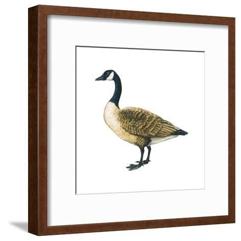 Canada Goose (Branta Canadensis), Birds-Encyclopaedia Britannica-Framed Art Print