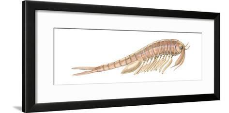 Fairy Shrimp (Eubranchipus Vernalis), Crustaceans-Encyclopaedia Britannica-Framed Art Print