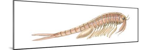 Fairy Shrimp (Eubranchipus Vernalis), Crustaceans-Encyclopaedia Britannica-Mounted Art Print