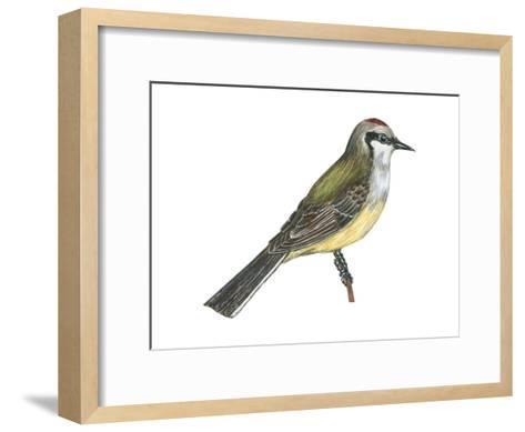 Western Kingbird (Tyrannus Verticalis), Birds-Encyclopaedia Britannica-Framed Art Print