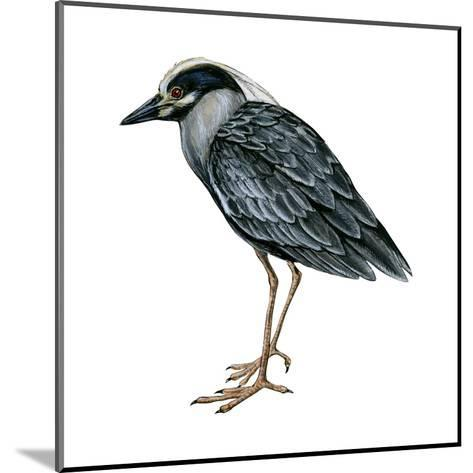 Yellow-Crowned Night Heron (Nyctanassa Violacea), Birds-Encyclopaedia Britannica-Mounted Art Print