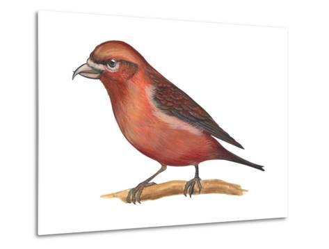 Red Crossbill (Loxia Curvirostra), Birds-Encyclopaedia Britannica-Metal Print