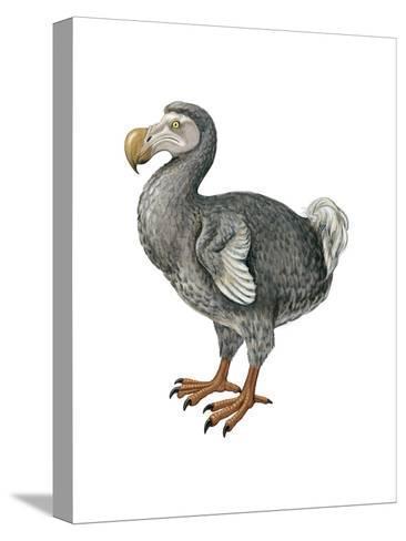 Dodo (Raphus Cucullatus), Birds-Encyclopaedia Britannica-Stretched Canvas Print