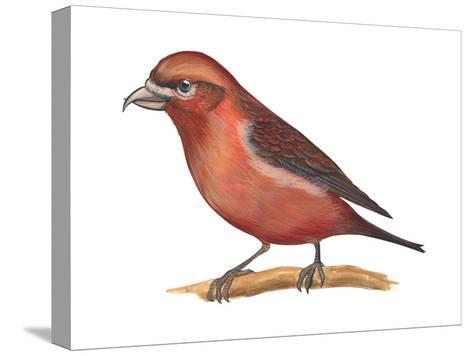 Red Crossbill (Loxia Curvirostra), Birds-Encyclopaedia Britannica-Stretched Canvas Print