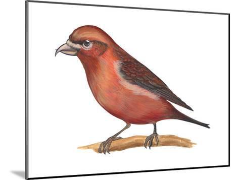 Red Crossbill (Loxia Curvirostra), Birds-Encyclopaedia Britannica-Mounted Art Print