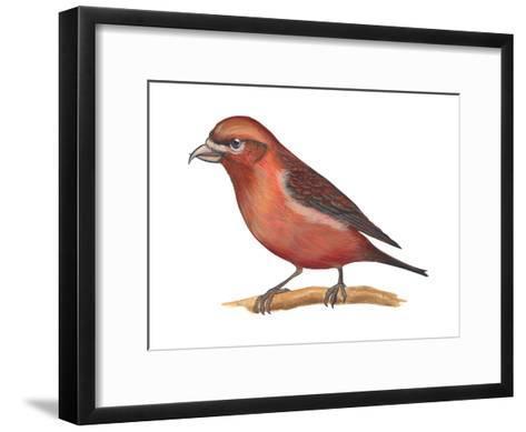 Red Crossbill (Loxia Curvirostra), Birds-Encyclopaedia Britannica-Framed Art Print