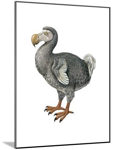Dodo (Raphus Cucullatus), Birds-Encyclopaedia Britannica-Mounted Art Print