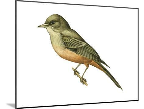 Say's Phoebe (Sayornis Saya), Birds-Encyclopaedia Britannica-Mounted Art Print