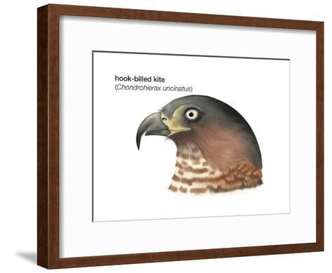 Head of Hook-Billed Kite (Chondrohierax Uncinatus), Birds-Encyclopaedia Britannica-Framed Art Print
