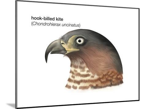 Head of Hook-Billed Kite (Chondrohierax Uncinatus), Birds-Encyclopaedia Britannica-Mounted Art Print