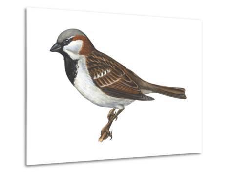 House or English Sparrow (Passer Domesticus), Birds-Encyclopaedia Britannica-Metal Print