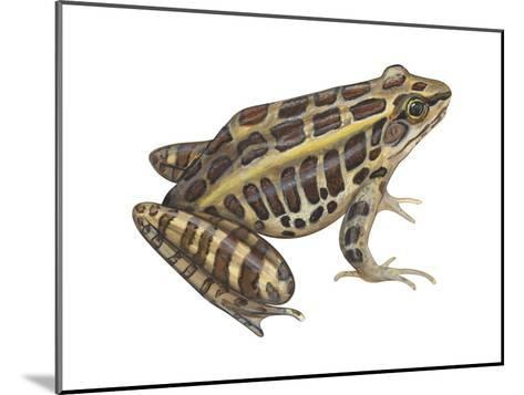 Pickerel Frog (Rana Palustris), Amphibians-Encyclopaedia Britannica-Mounted Art Print
