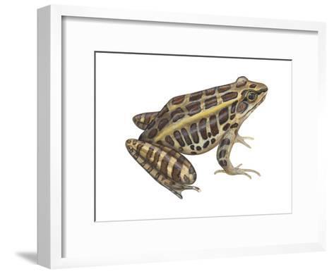 Pickerel Frog (Rana Palustris), Amphibians-Encyclopaedia Britannica-Framed Art Print