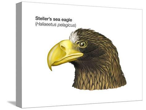 Head of Steller's Sea Eagle (Haliaeetus Pelagicus), Birds-Encyclopaedia Britannica-Stretched Canvas Print