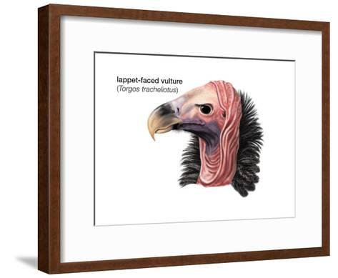 Head of Lappet-Faced Vulture (Torgos Tracheliotus), Birds-Encyclopaedia Britannica-Framed Art Print