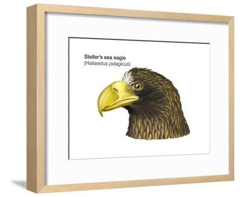 Head of Steller's Sea Eagle (Haliaeetus Pelagicus), Birds-Encyclopaedia Britannica-Framed Art Print