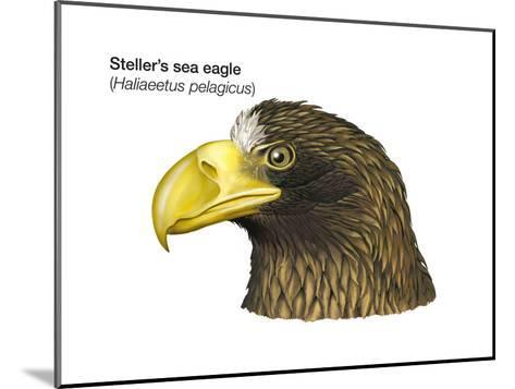 Head of Steller's Sea Eagle (Haliaeetus Pelagicus), Birds-Encyclopaedia Britannica-Mounted Art Print